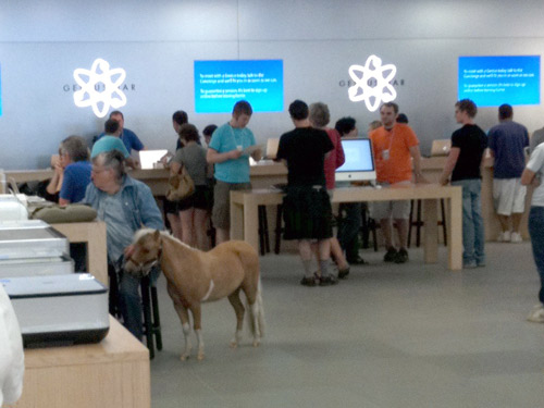 A mini horse in the Apple store